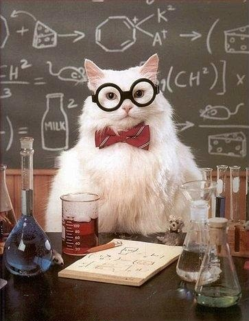 Art chemistry cat